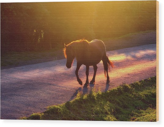 Horse Crossing The Road At Sunset Wood Print