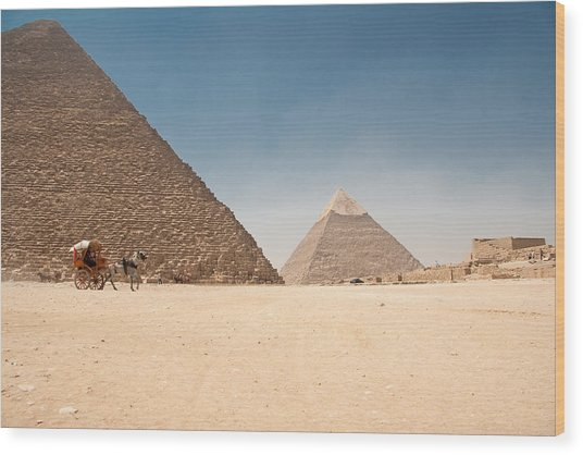 Horse Dragging Cart In Front Of The Giza Pyramids Wood Print