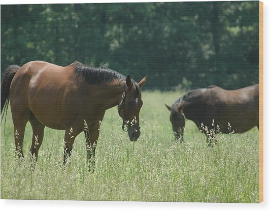 Horse Dreams Tall Grass Wood Print by William A Lopez