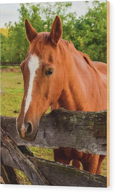 Horse Friends Wood Print