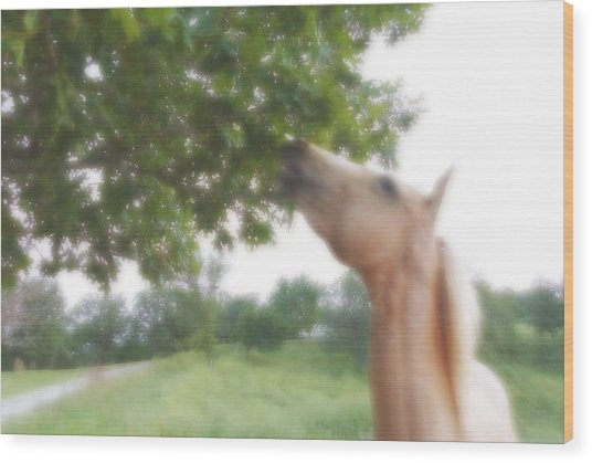 Horse Grazes In A Tree Wood Print