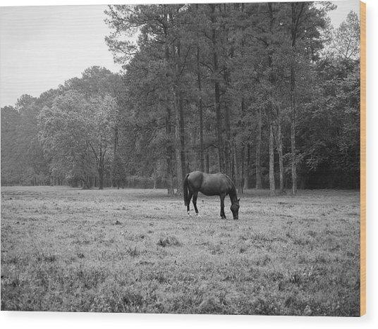 Horse In Pasture Wood Print