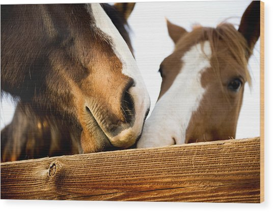 Horse Kisses Wood Print by Michelle Shockley