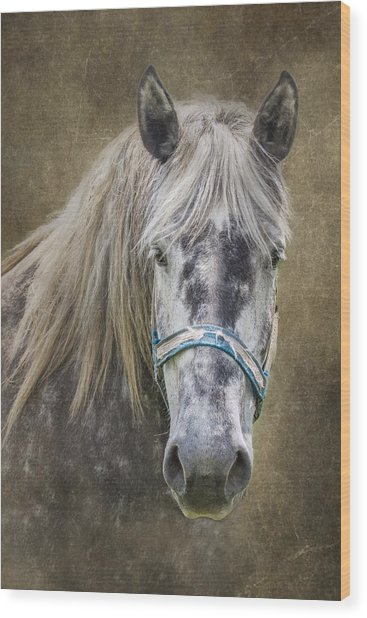 Horse Portrait I Wood Print
