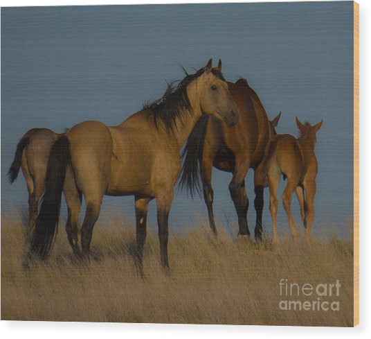 Horses 1 Wood Print