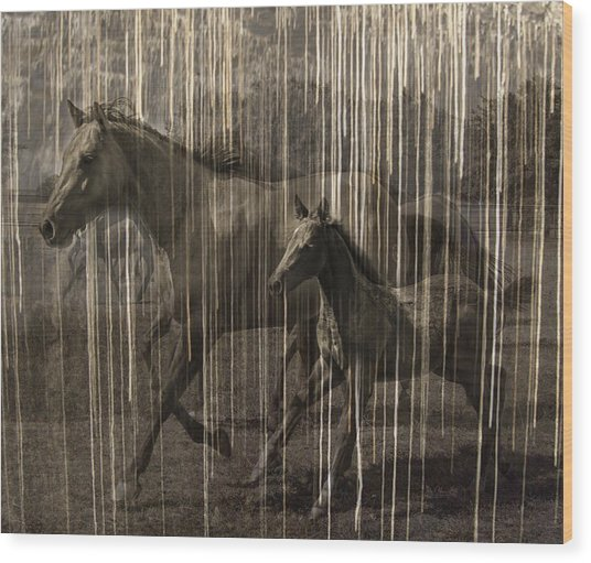 Horses Abstract Mare And Foal Wood Print