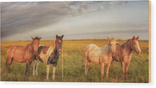 Horses At Kalae Wood Print