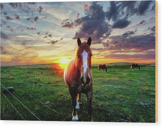 Horses At Sunset Wood Print