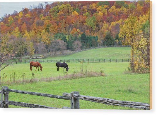 Horses Contentedly Grazing In Fall Pasture Wood Print