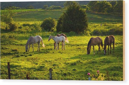 Horses Grazing In Evening Light Wood Print