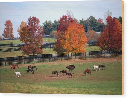 Horses Grazing In The Fall Wood Print