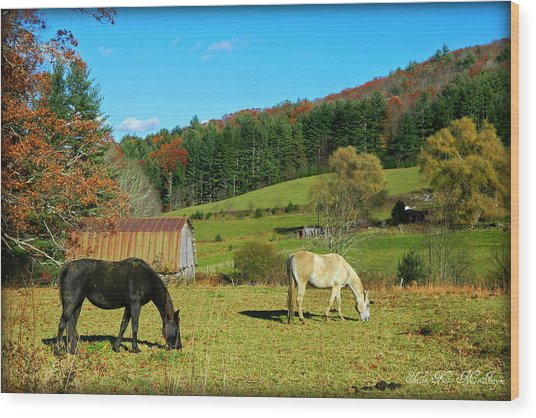 Horses Grazing The Pasture Wood Print