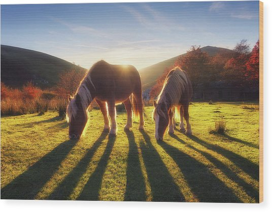 Horses In Austigarmin Wood Print