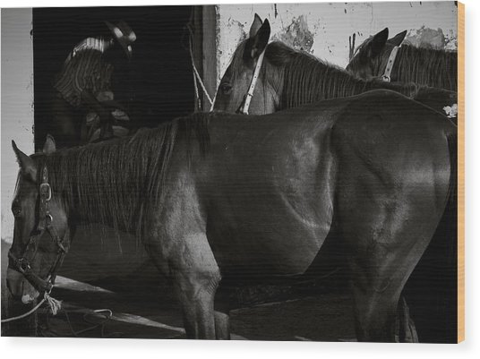 Horses In Mexico Wood Print by Dane Strom