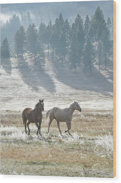 Horses In The Morning Light Wood Print