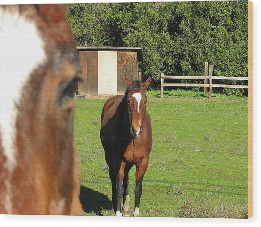 Horses Wood Print by Kathy Roncarati