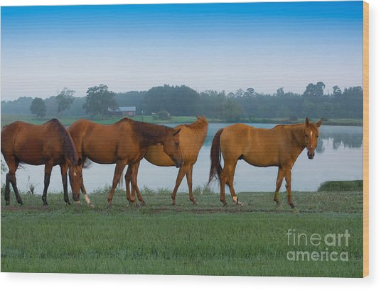 Horses On The Walk Wood Print