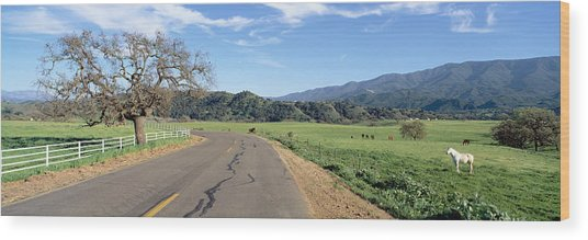 Horses, Santa Ynez Mountains In Spring Wood Print