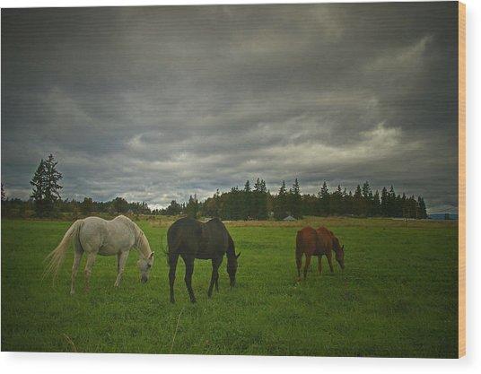 Horses Under Heavy Sky Wood Print