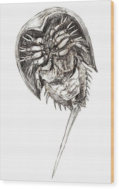 Horseshoe Crab Wood Print