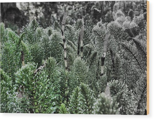 Horsetail Dewpoint Wood Print