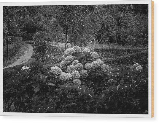 Hortencias-bosque Do Silencio-campos Do Jordao-sp Wood Print
