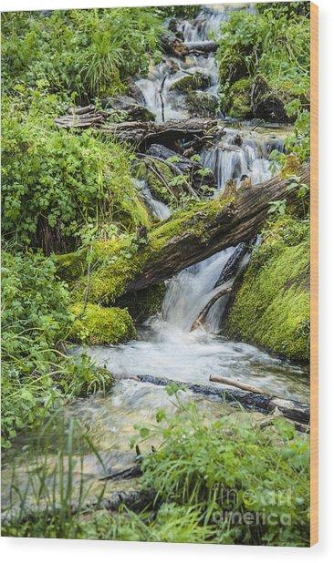 Horton Springs Wood Print