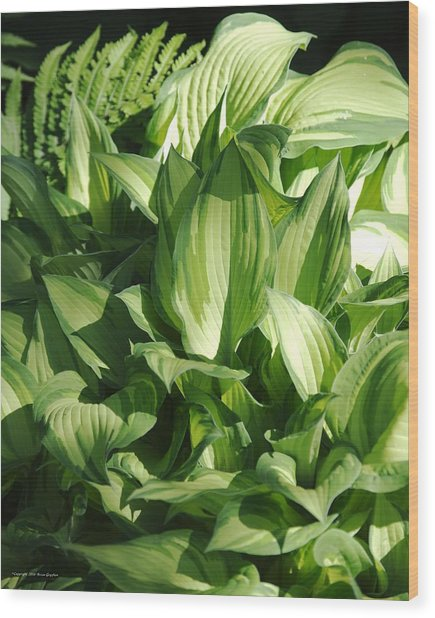 Wood Print featuring the photograph Hosta 5416 by Brian Gryphon