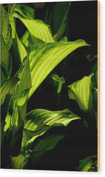 Wood Print featuring the photograph Hosta 561 by Brian Gryphon