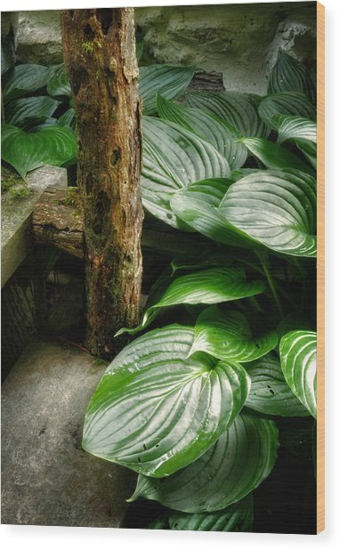 Hosta And Steps Wood Print