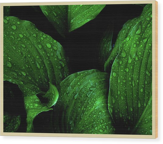 Hostas After The Rain I Wood Print