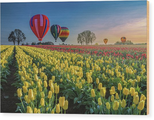 Hot Air Balloons Over Tulip Fields Wood Print