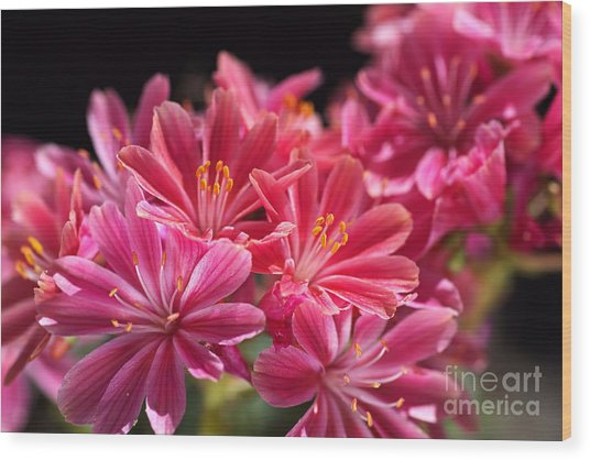 Hot Glowing Pink Delight Of Flowers Wood Print