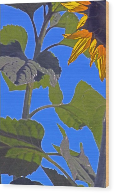 Hot Sunflower Wood Print by Leslie-Jean Thornton