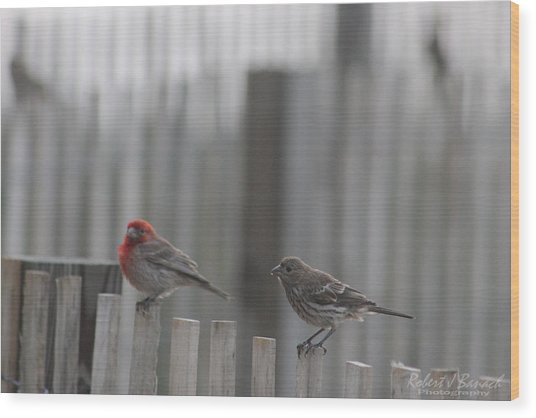 House Finches On The Fence Wood Print
