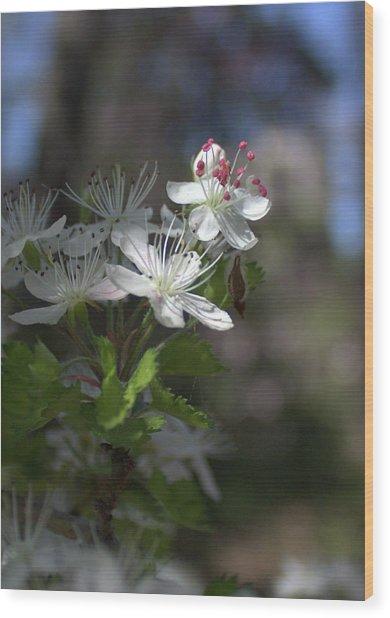 Houston Arboretum Flowers Wood Print