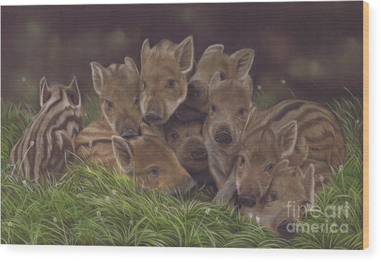 Huddle Of Humbugs Wood Print