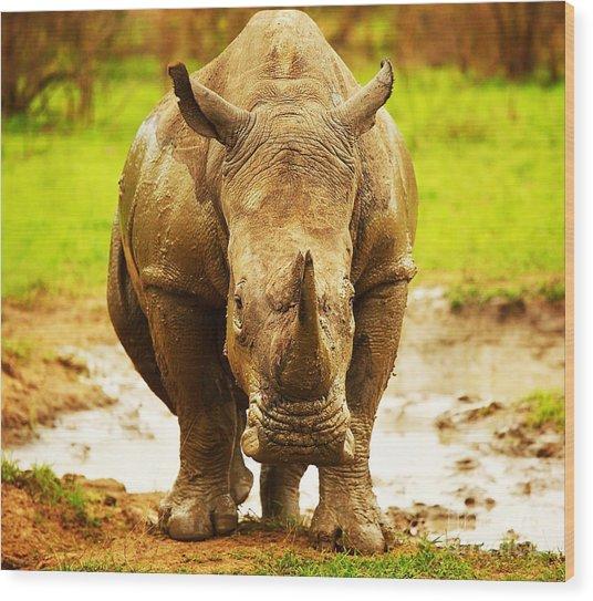 Huge South African Rhino Wood Print