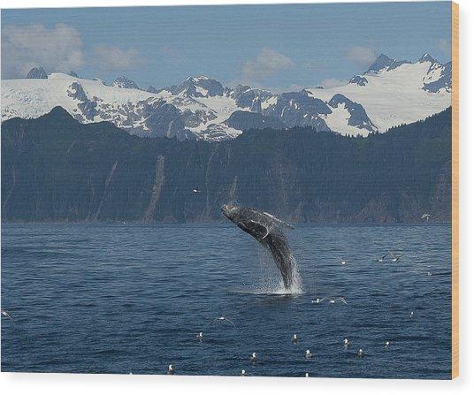 Humback Whale Full Breach Wood Print