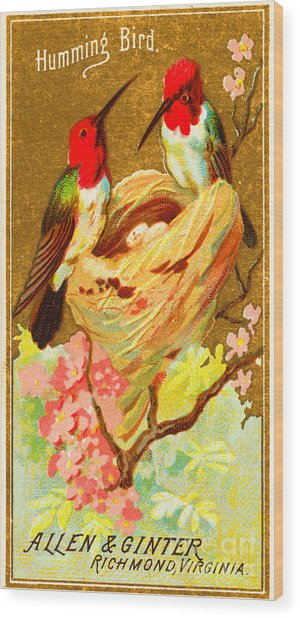 Humming Bird Victorian Tobacco Card By Allen And Ginter Wood Print