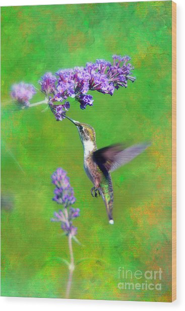 Humming Bird Visit Wood Print