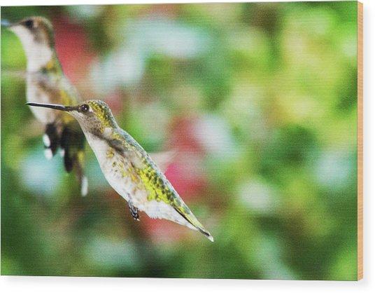 Hummingbird 07 - 9-13 Wood Print by Barry Jones