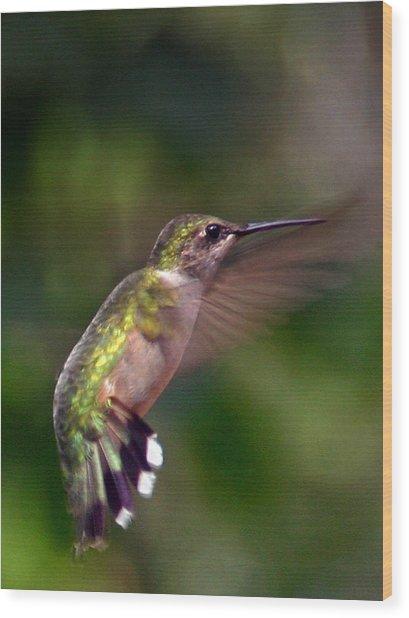Hummingbird 3 Wood Print