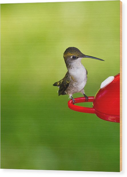 Hummingbird 4 Wood Print by Edward Myers