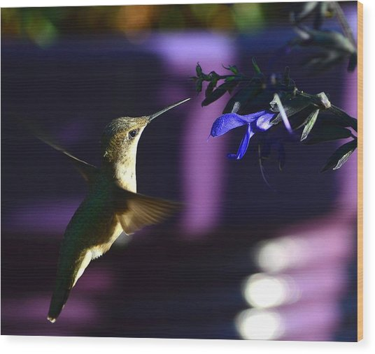 Hummingbird And Blue Flower Wood Print