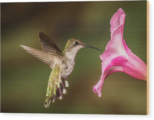Hummingbird And Hibiscus Wood Print