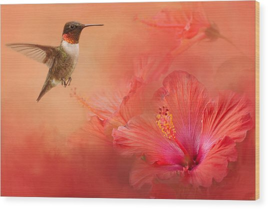 Hummingbird And Peach Hibiscus Wood Print