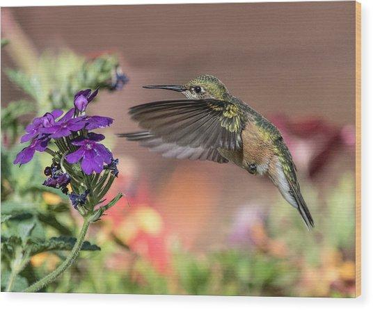 Hummingbird And Purple Flower Wood Print