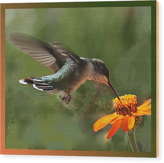 Hummingbird Art Wood Print