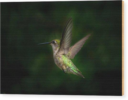Hummingbird B Wood Print